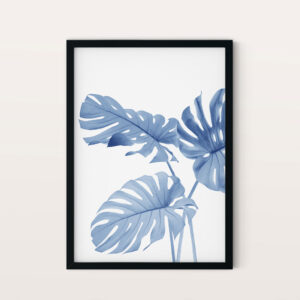Monstera NO1